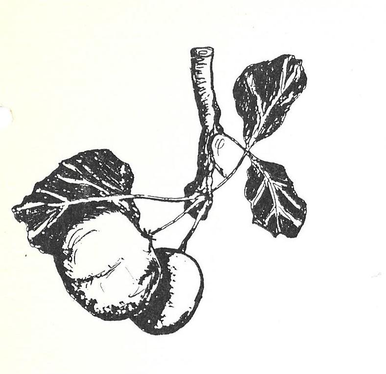 tekening paul hoftijzer appel